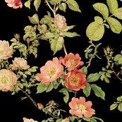 English_rose____black___peacoquette_designs___copyright_2017_shop_thumb