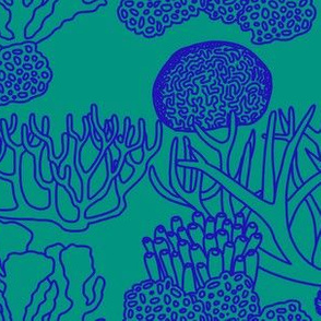 Coral (blue on teal)