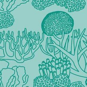 Coral (teal on light teal)