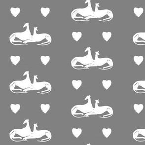 sighthound friends, white, grey