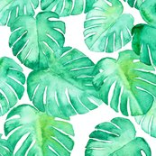 Rmonstera_final150_large-04_shop_thumb