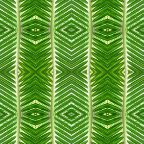 palm frond 16