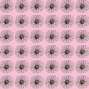 crazy daisy pink