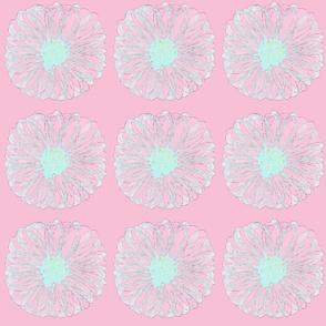 crazy daisy pink laser ice blue