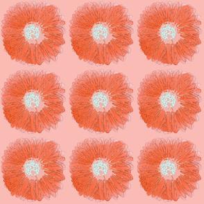 crazy daisy orange laser