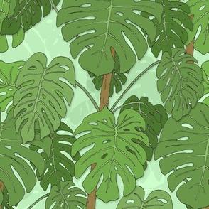 Monstera jungle_mint