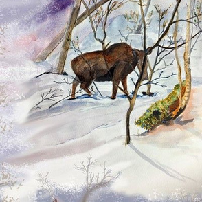 Moose in Winter by Salzanos