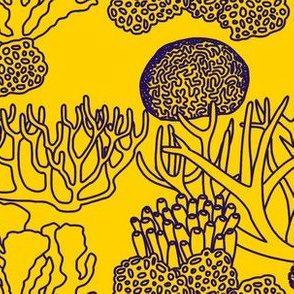 Coral (purple on yellow)