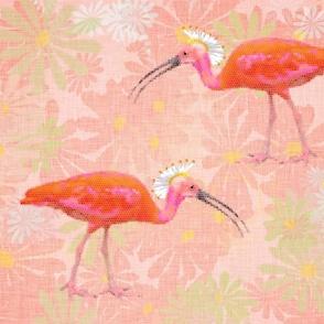 ibis_sporting_a_mohawk