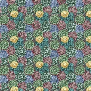 succulent_patern