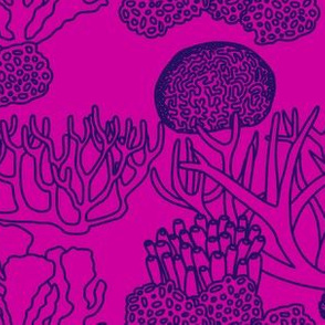 Coral (purple on pink)