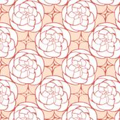 Succulents in Peach