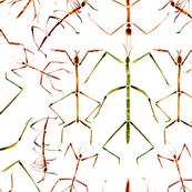 Stick Bugs