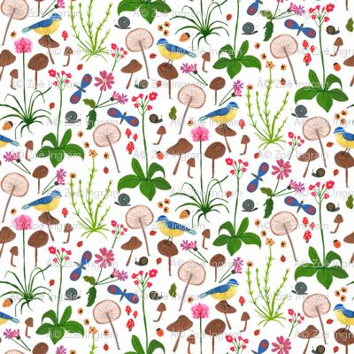 Scottish Wildflowers