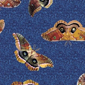 Polyphemus Moths on Blue