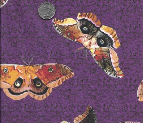 Polyphemus Moths on Purple