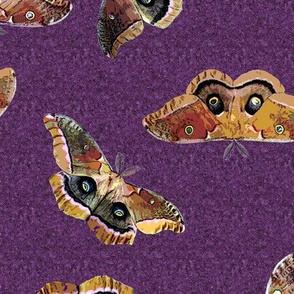 Polyphemus Moths on Purple