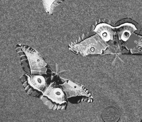 Polyphemus Moths in Grey
