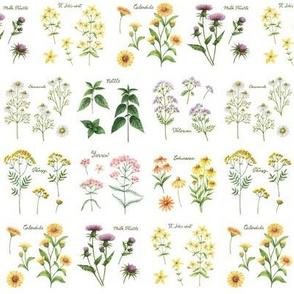 Claire's Herbarium (white)