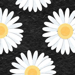 Spring Daisies: Black