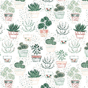 Simply Succulents - © Lucinda Wei