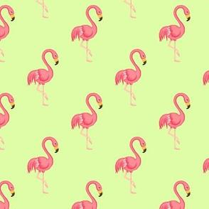 Flamingo midscale Pistachio