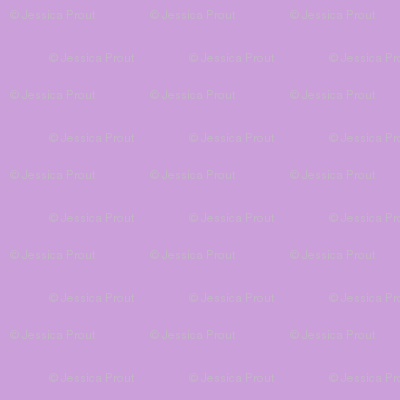 solid purple - mermaid coordinate