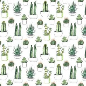 Watercolour Cacti & Succulent - Smaller
