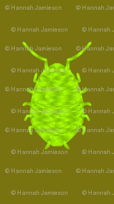 Chubby bed bug beetle