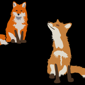 Foxes on black