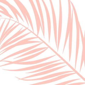 Blushing_Palm