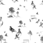 Park Pigeon