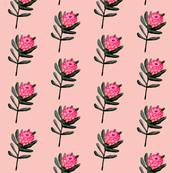 Protea floral in watercolor on pink