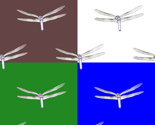 Rdragonflyon4colors_thumb