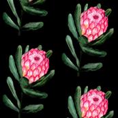 Protea dark floral watercolor