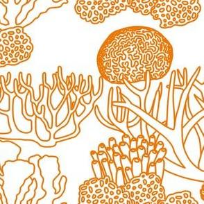 Coral (orange on white)