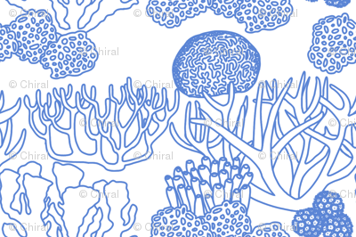Coral (mid blue on white)