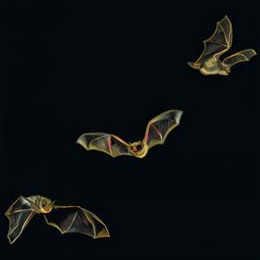 Little brown bat in flight