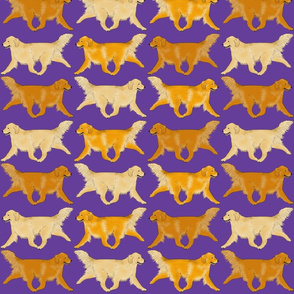 Trotting Golden Retriever border purple