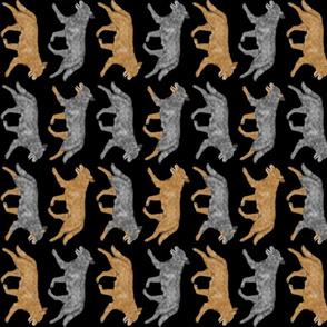 Trotting Australian cattle dog border B - vertical