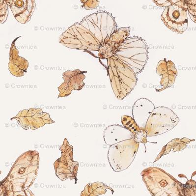 Autumn Moths