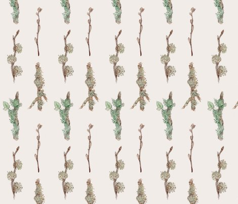 Lichen_and_moss_shop_preview