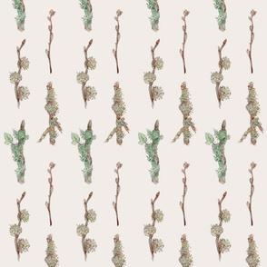 Lichen_and_Moss