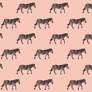 zebra  - 12