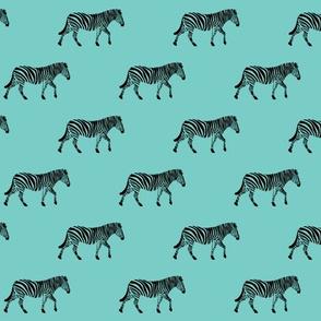 zebra on teal