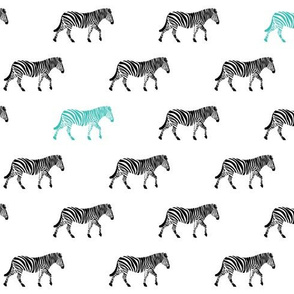 zebra with teal