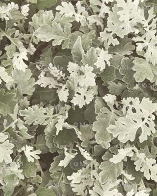 Spring Camo by Autumn