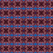 DSCN2418_Straw_Flower_Pattern