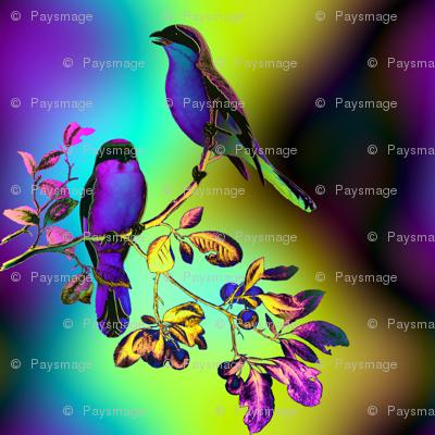 BIRDS ON A GLASS FENCE 2 bird rainbow sky PURPLE BLUE GLOWING SKY