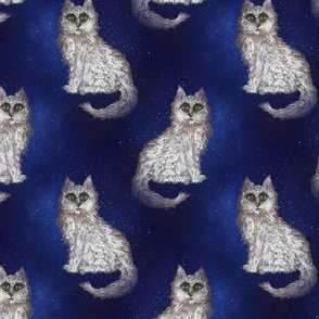 MYSTERIOUS CAT STARRY NIGHT